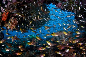 Photo by Ethan Daniels Raja Ampat