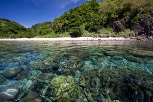 Apo Island Sanctuary - diving not to be missed!