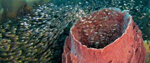 Under water world of Wakatobi